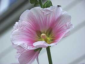 Beispielbild 'Blume' nach Farbraumkonvertierung
