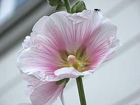 Beispielbild 'Blume' ohne Farbraumkonvertierung