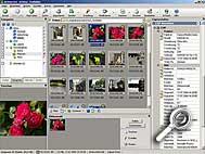 ACDSee 6.0 Deluxe - Kategoerienansicht [Screenshot: MediaNord]