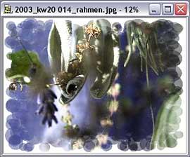 Jasc Paint Shop Pro Photo Album 4 - Rahmenfunktion [Screenshot: MediaNord]