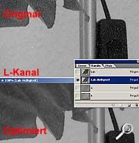 L-Kanal für die Helligkeitsabstufungen [Screenshot: PhotoWorld]