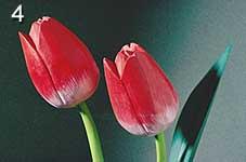 Bild 4: Flash direkt links, Aufhellung rechts, Hintergrund teilweise abgedeckt [Foto: Jürgen Rautenberg]