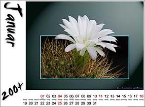 Vorlage für Fotokalender [Vorlage: Kakteenweb.de]